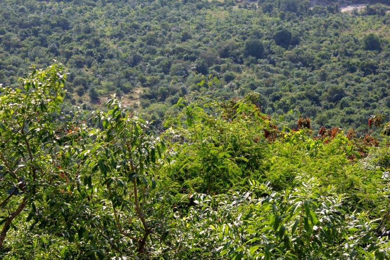 Scenische kijk op het landschap langs de ghat-weg op weg naar Yercaud, Salem, India stock foto