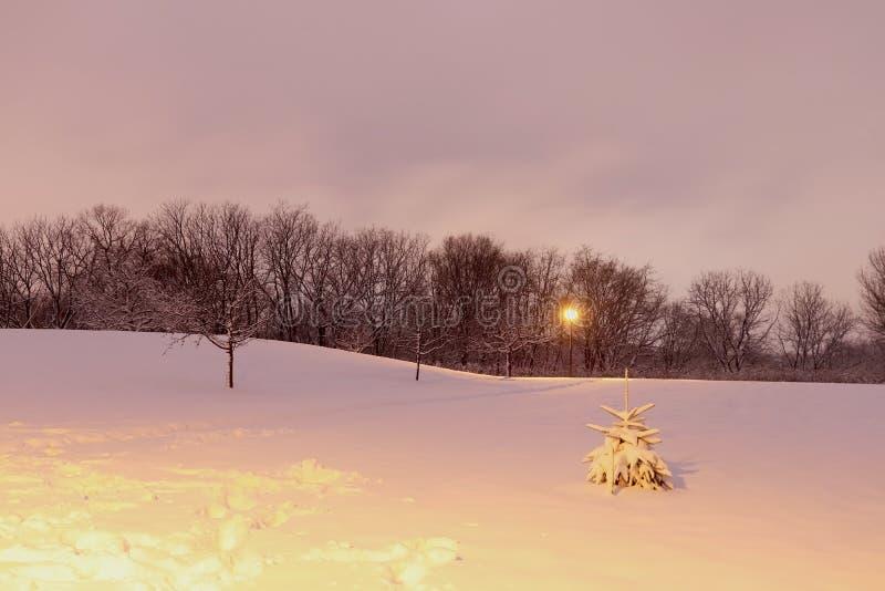 Scenisk bakgrund för vinternattnatur royaltyfri fotografi