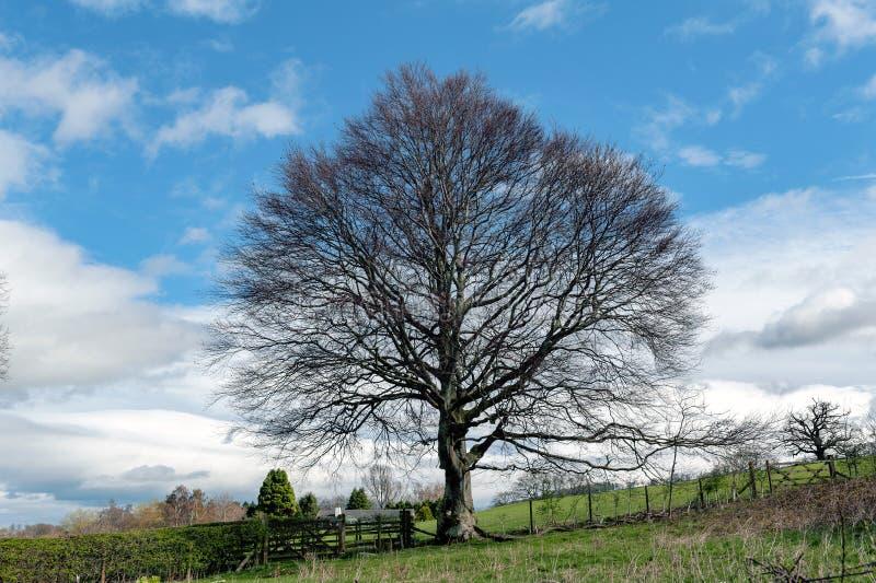 Scenisk bygd av England med ett stort träd på en backelantgård under höst royaltyfria bilder