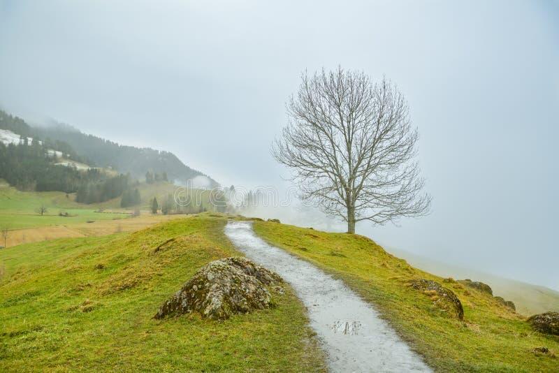 Scenisk gå slinga på Seebodenalp ovanför Kussnachten f.m. Rigi, liten stad i Schweiz royaltyfri fotografi