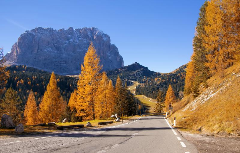 Scenisk körbana i Dolomitefjällängar med härliga gula lärkträd och det Sassolungo berget på bakgrund arkivfoto