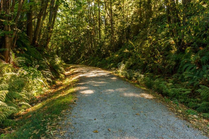 Scenisk och härlig fotvandra grusväg eller slinga i skogen royaltyfria foton