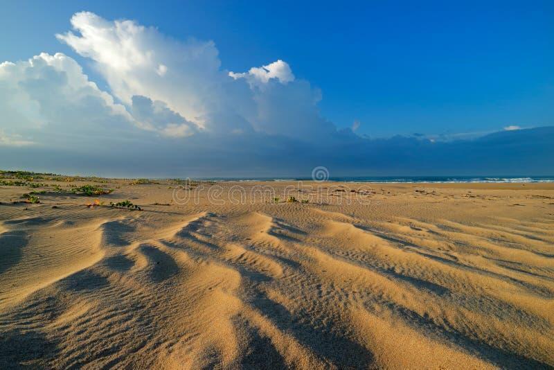 Scenisk sandig strand - Sydafrika arkivbild