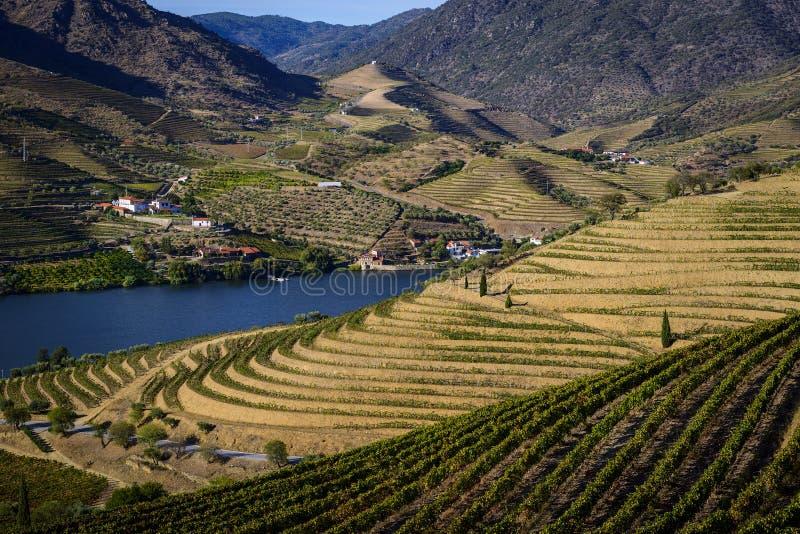 Scenisk sikt av den härliga Douro dalen med vingårdar och terrasserade lutningar i den Douro regionen royaltyfria bilder