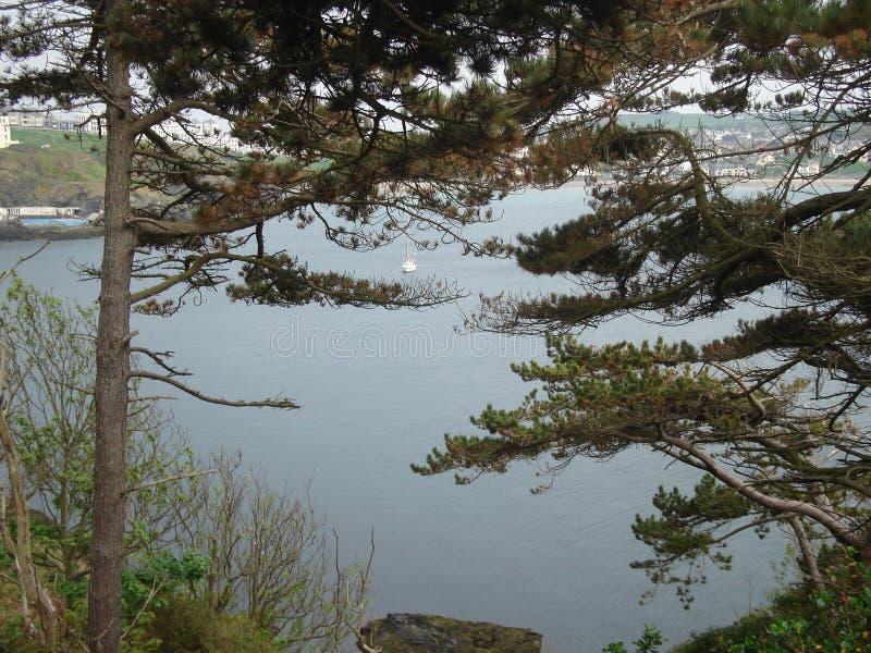Scenisk sikt av havet bak trädfilialerna royaltyfri fotografi