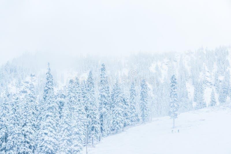 Scenisk sikt av litet folk som går i snöberget, Washington, arkivfoto
