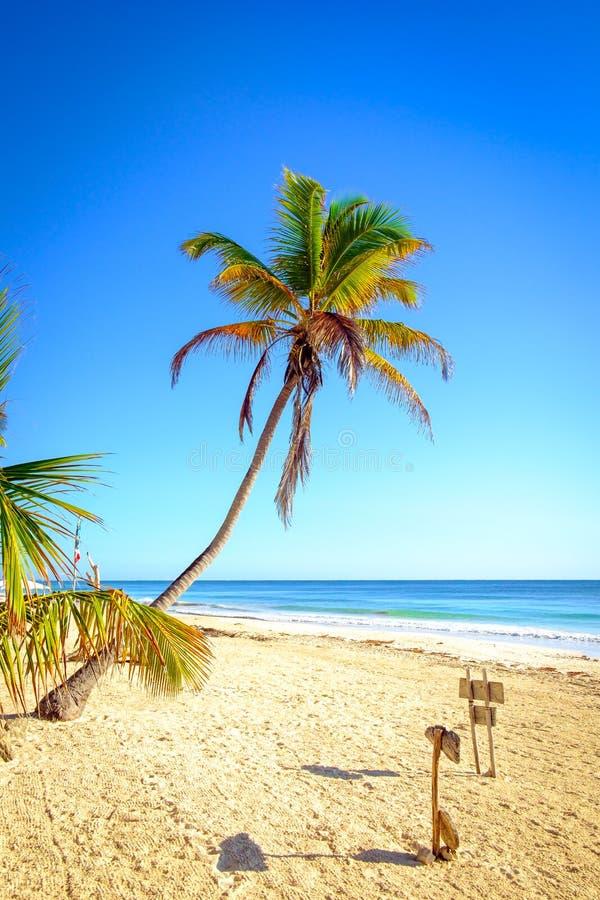 Scenisk sikt av sommarstrandlandskapet med palmträd arkivfoton