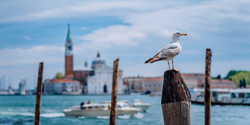 Scenisk sikt av suddig Venedig panorama av Venedig invallning med seagullen framme Mest populär touristic dragning arkivbilder
