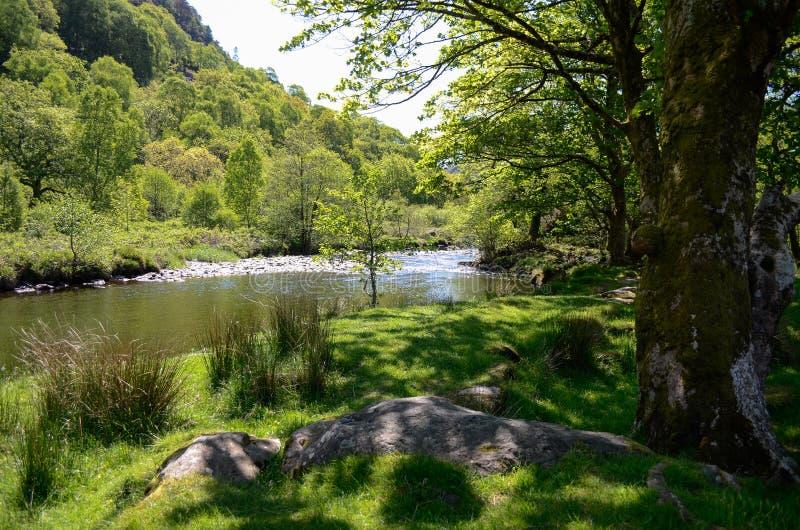 Scenisk sikt ner en lugna flod bland träden som ser över till de forested kullarna royaltyfri bild