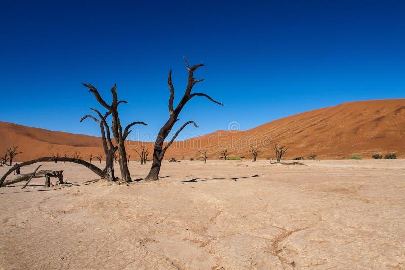 Scenisk sikt p? Deadvlei, Sossusvlei Namib-Naukluft nationalpark, Namibia royaltyfri foto