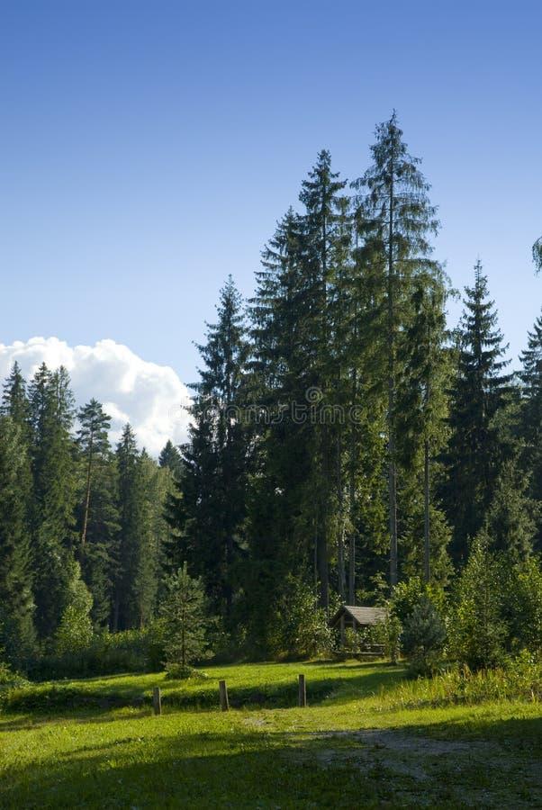 scenisk skogäng royaltyfri foto