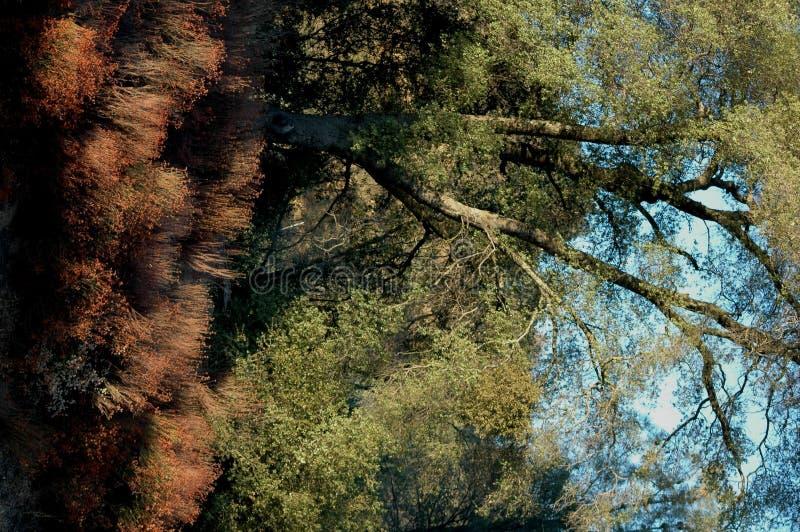 Download Scenisk skog fotografering för bildbyråer. Bild av landskap - 29527