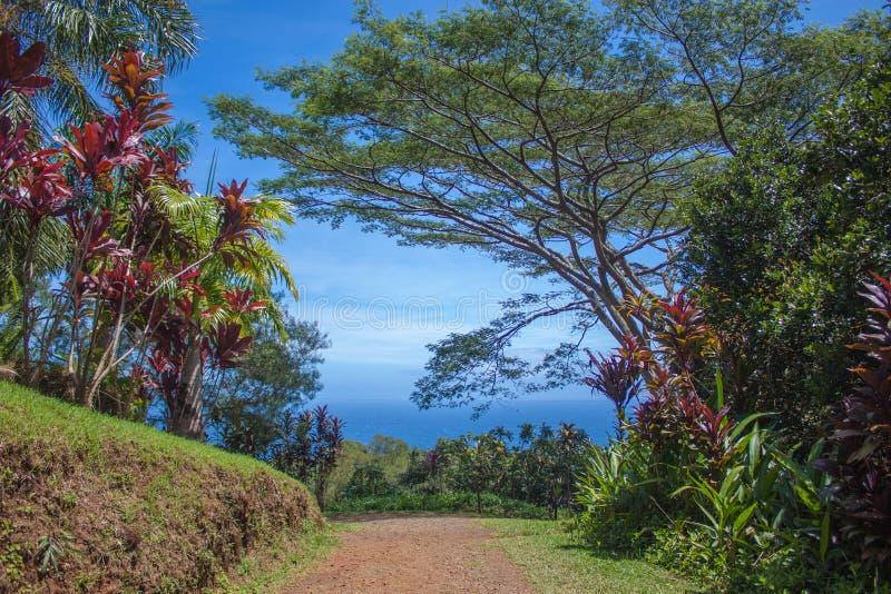 Scenisk slinga på trädgården av Eden Arboretum arkivbilder