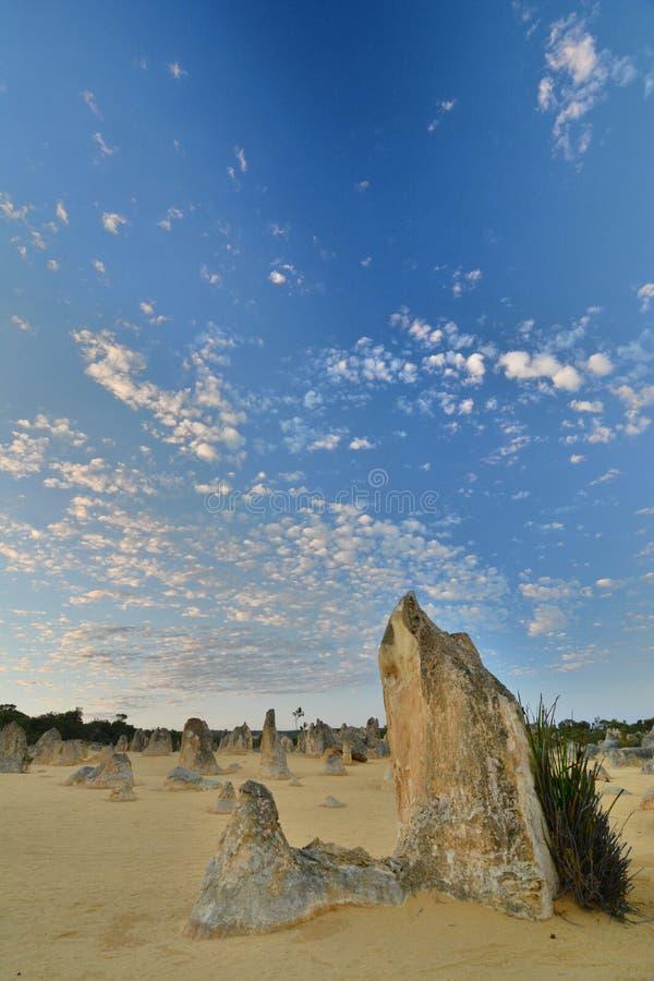 Scenisk soluppgång i höjdpunktöken Nambung nationalpark cervantes Västra Australien australasian arkivbilder