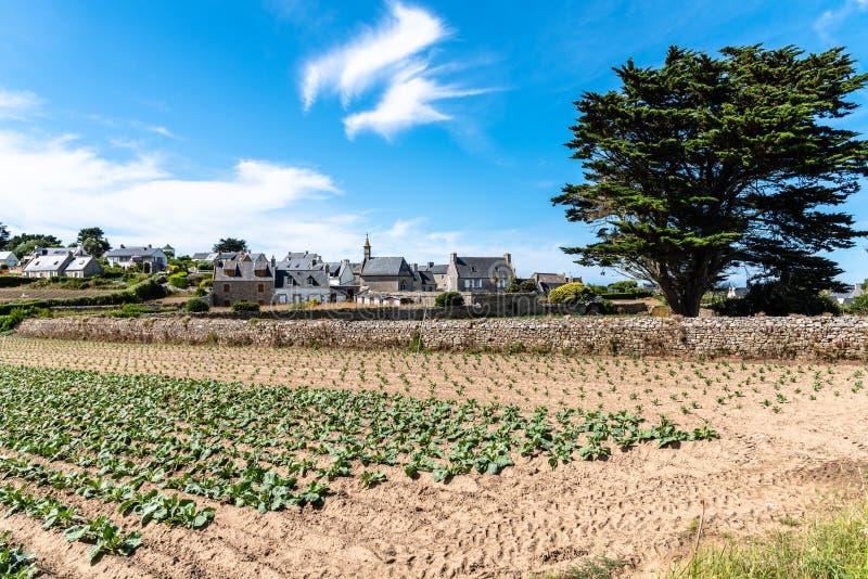 Scenisk syn på byar och planteringar på ön Batz arkivbild