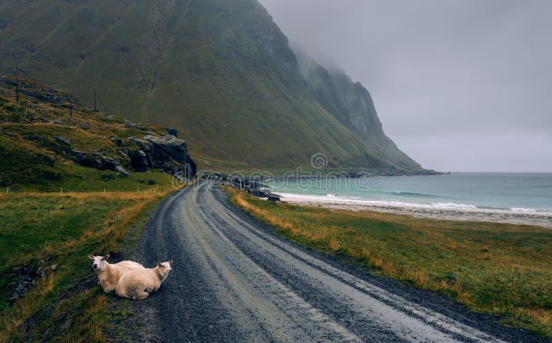 Scenisk väg längs kustlinjen i Norge på en regnig och dimmig dag fotografering för bildbyråer