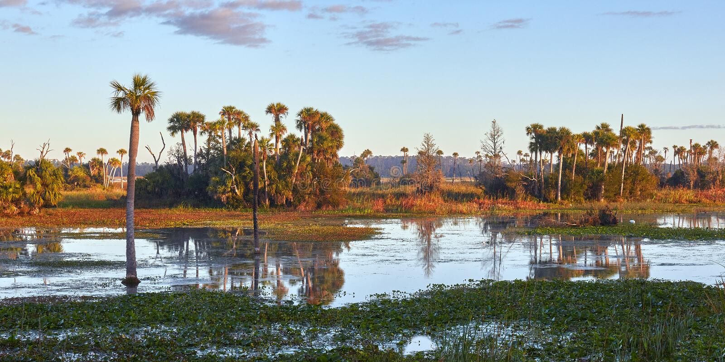 Sceniska Florida våtmarker arkivbild