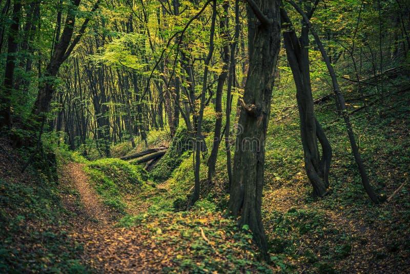 Sceniska Forest Creek arkivbild