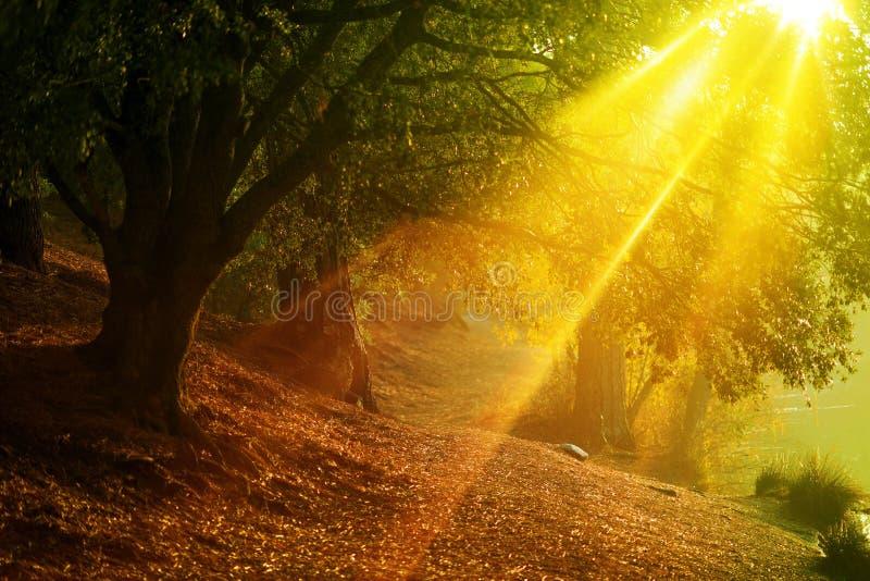 Sceniska Forest Trail royaltyfria foton