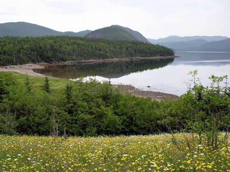 Sceniska Newfoundland royaltyfria bilder