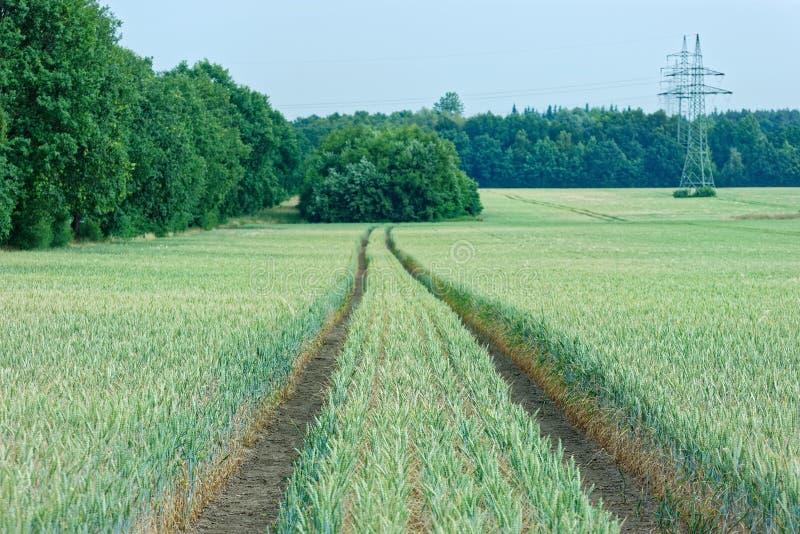 Sceniska siktstraktorspår i koloni av sädesslagväxter och höga spänningstorn, elektricitetspyloner i det avlägset arkivfoton