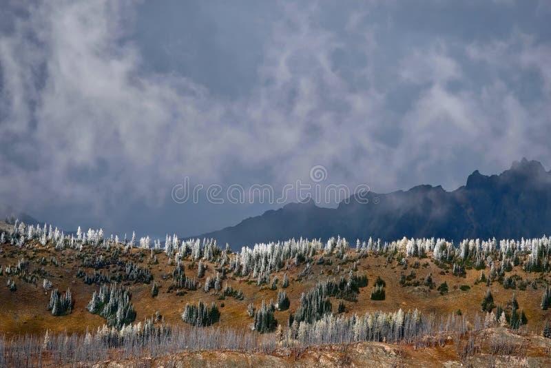 Sceniskt landskap för norr kaskadnationalpark arkivfoton