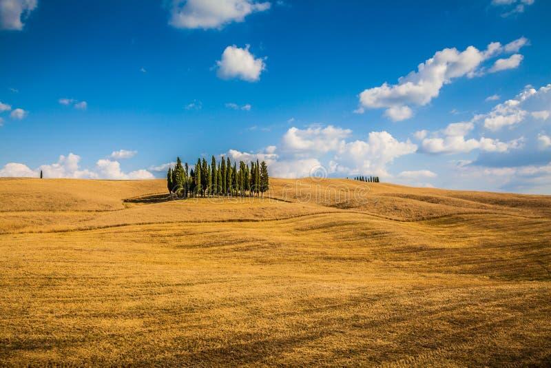 Sceniskt Tuscany landskap med cypressträd, Val d'Orciadal, Italien arkivbilder