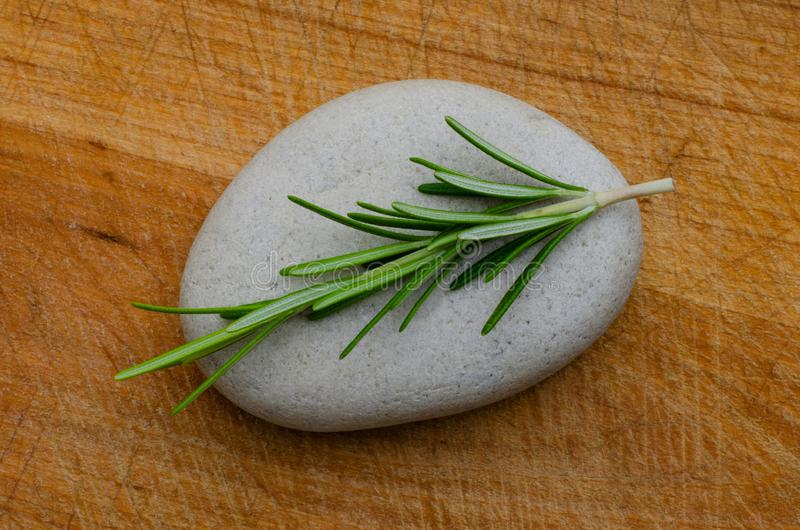 A SCENT OF ROSEMARY 04 royalty free stock photo