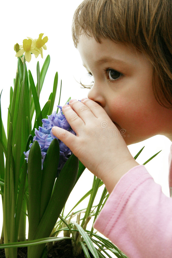Scent of spring stock photography