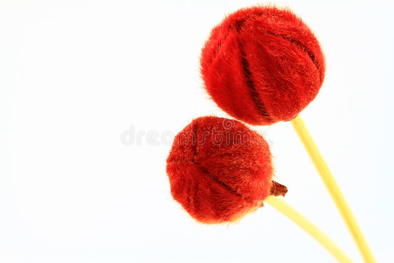 Scent Sticks With Red Tips Stock Photo
