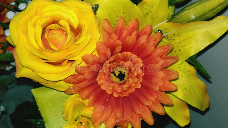 Scent of summer. Flower yellow nature stock images