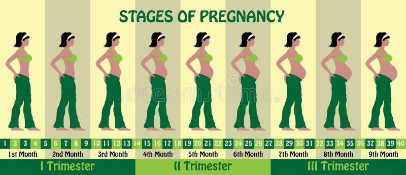 Sceny brzemienność z kobieta w ciąży są ubranym stanika i miechowatego pa royalty ilustracja