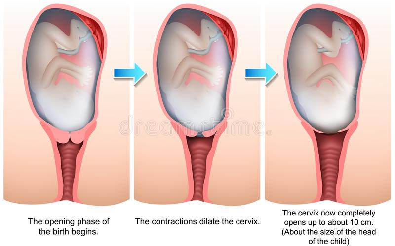 Sceny narodziny 3d medyczna ilustracja ilustracji