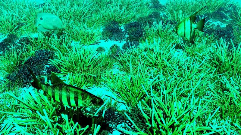 sceny underwater ilustracji