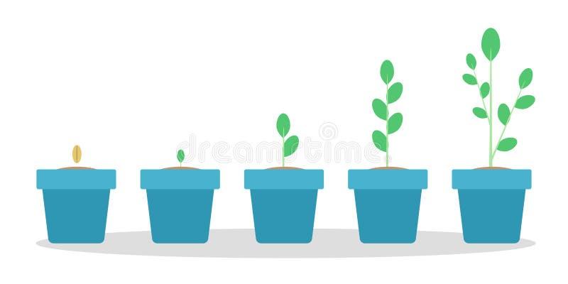 Sceny zielonej rośliny przyrost w błękitnym garnku ilustracja wektor