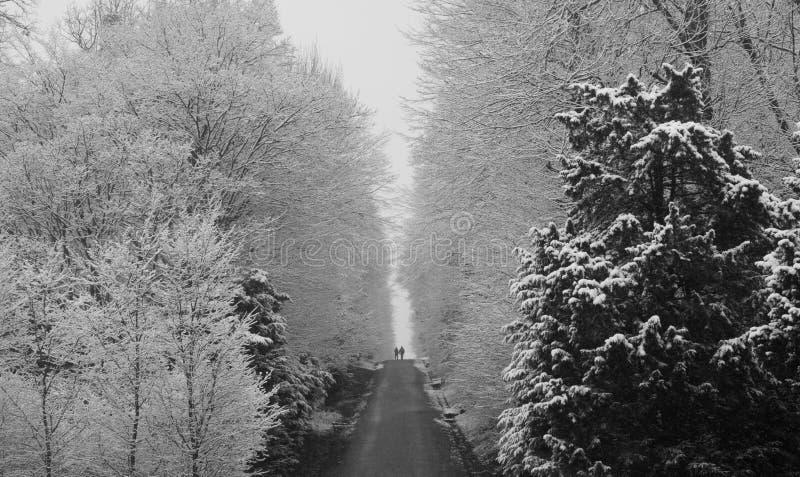 Schönbrunn park w z zimą z śniegiem zdjęcie stock