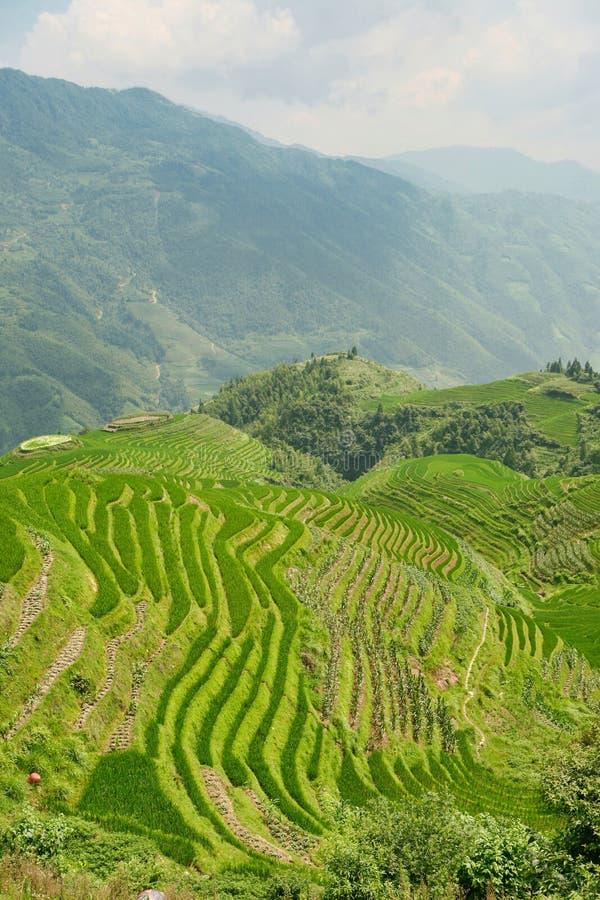 Schöne Ansicht von Smaragdreisterrassen Longjie's und von umgebenden Bergen stockfotos