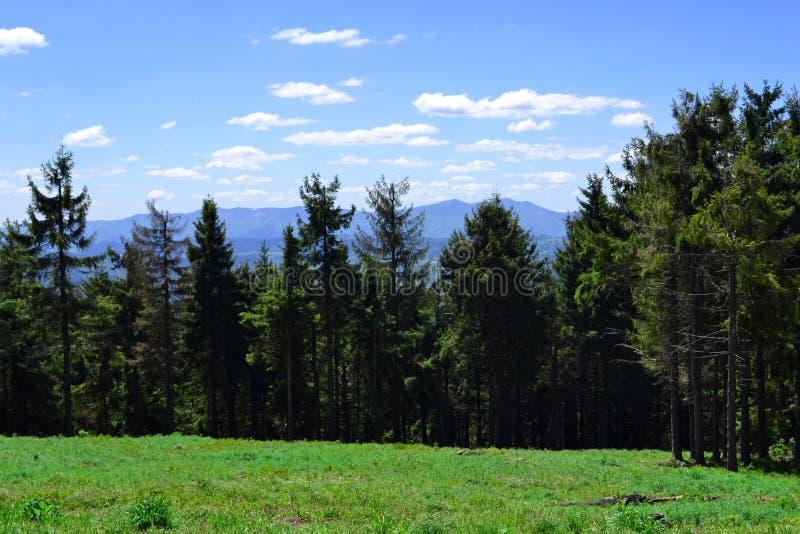Schöne Landschaft des Sommerwaldes in den Karpatenbergen Abschließender Halt nachdem dem Klettern Mittagspause auf Gras in sonnig lizenzfreie stockfotografie