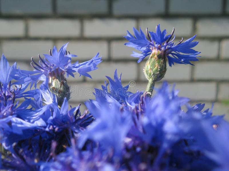 Schöne Sommerblumen machen Beobachter glücklich an einem sonnigen Tag stockfoto