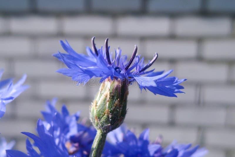 Schöne Sommerblumen machen Beobachter glücklich an einem sonnigen Tag lizenzfreie stockfotografie