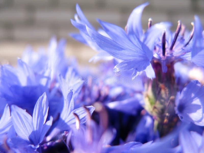 Schöne Sommerblumen machen Beobachter glücklich an einem sonnigen Tag lizenzfreie stockbilder