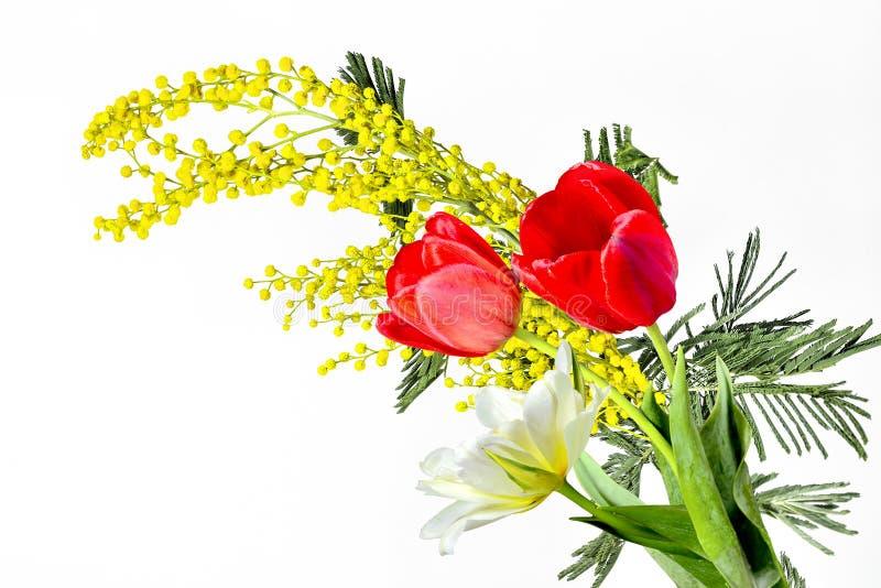 Schöner Frühlingsblumenstrauß von Tulpen und Niederlassung blühenden Mimose Akazie dealbata Abschlusses oben auf dem weißen Hinte lizenzfreies stockfoto