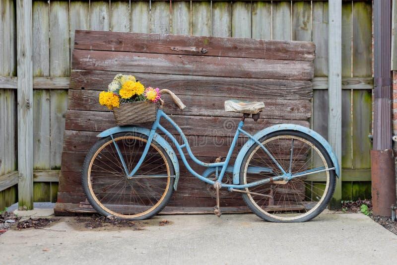Schäbiges blaues Weinlesefahrrad auf barnwood Hintergrund stockfotografie