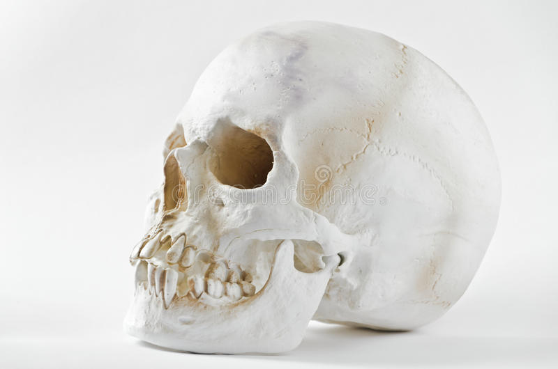 Schädel stockbild