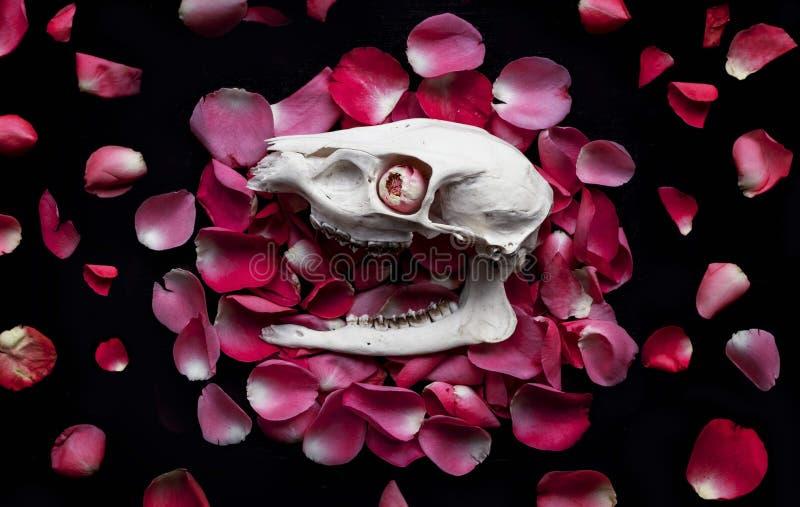 Schädel auf Blumenblättern lizenzfreie stockfotografie