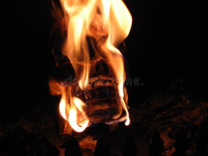 Schädel auf Feuer stockfotografie