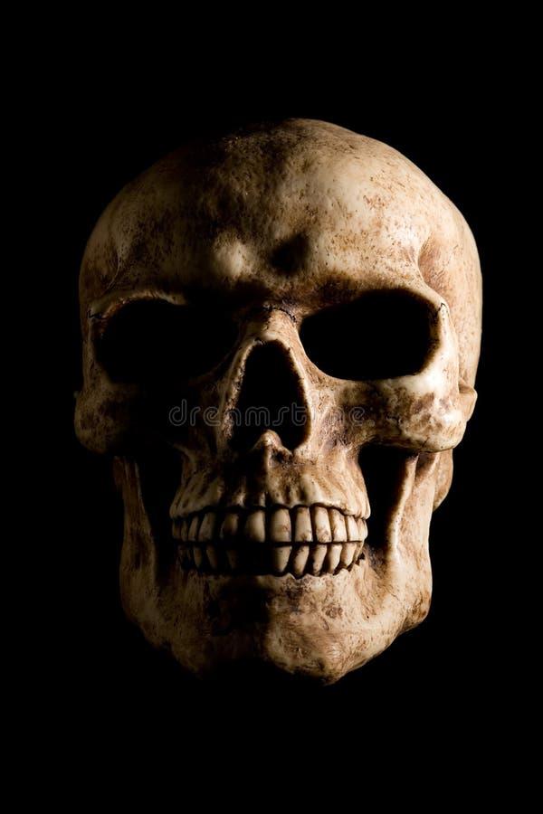 Schädel auf Schwarzem lizenzfreie stockfotografie