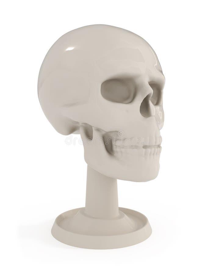 Schädel-Fehlschlag - menschliche Anatomie lokalisiert auf Weiß stock abbildung