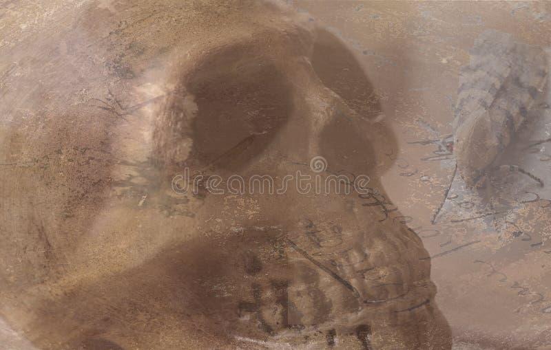 Schädel mit gestreifter Motte auf alter Handschrift stockfotos