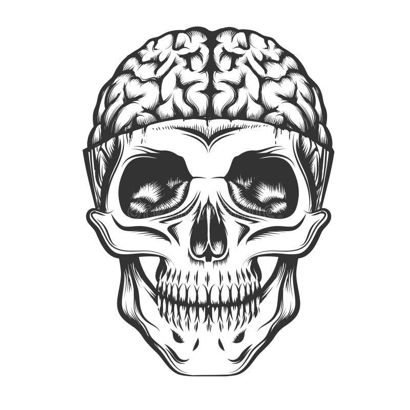 Schädel mit offenem Gehirn lizenzfreie abbildung